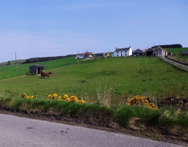 Paddock and stable at Findlayston farm