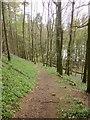 SE2666 : Fish Pond Wood by Derek Harper