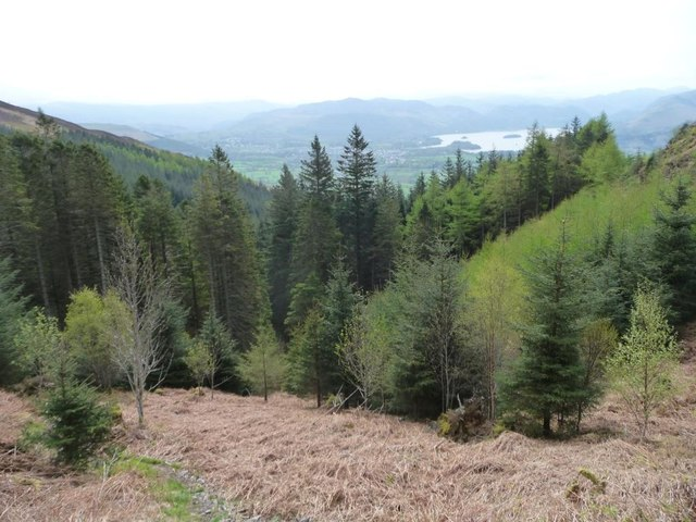 The top of Lyzzick Wood, south-east of Dodd summit