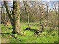 SE2766 : Damp woodland near Hollin Hill by Derek Harper