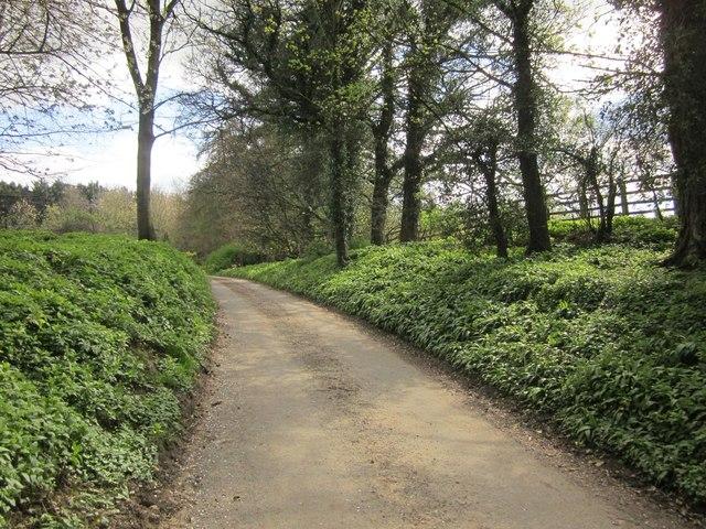 Ripon Rowel Walk near Ingerthorpe Hall