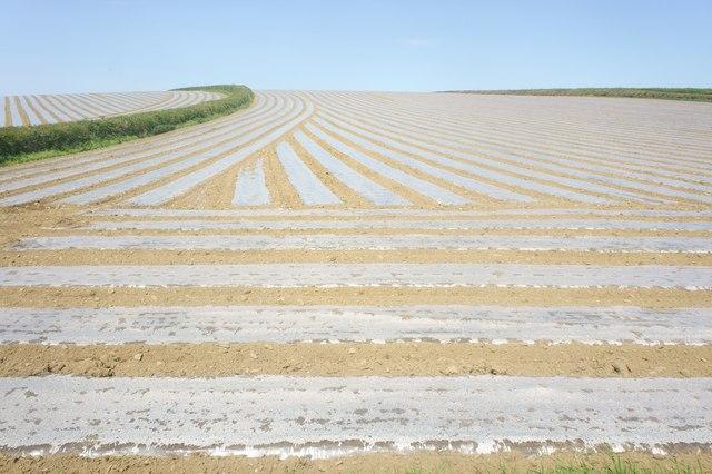 Field under plastic mulch film