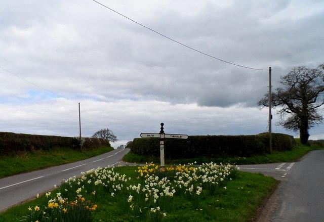 Daffodils and finger post at Ashtons-cross