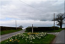 SJ5050 : Daffodils and finger post at Ashtons-cross by Bikeboy