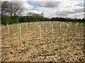 SE2865 : Tree guards by the Ripon Rowel Walk by Derek Harper