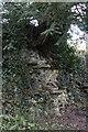 SU6362 : Tree in the wall by Bill Nicholls