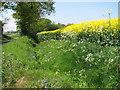 TG3726 : Roadside ditch by Oldbarn Farm by Evelyn Simak