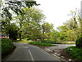 TM4585 : Rectory Road, Shotterley by Adrian Cable