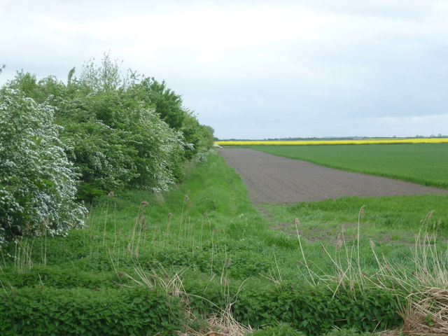 Hedge of hawthorn on the fen