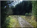 NS3482 : End of forestry track by Lairich Rig