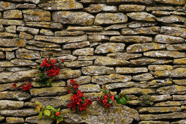 Quince through wall