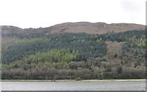J1021 : Fathom Forest viewed across the Newry River by Eric Jones