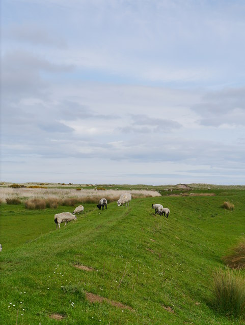 Flood Embankment At Goswick