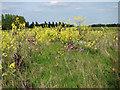 TG1438 : Fields south of Osier Lane by Evelyn Simak