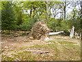 SU2311 : Ocknell Inclosure, fallen tree by Mike Faherty