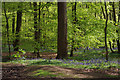 SO9975 : Lickey Hills Country Park by Stephen McKay
