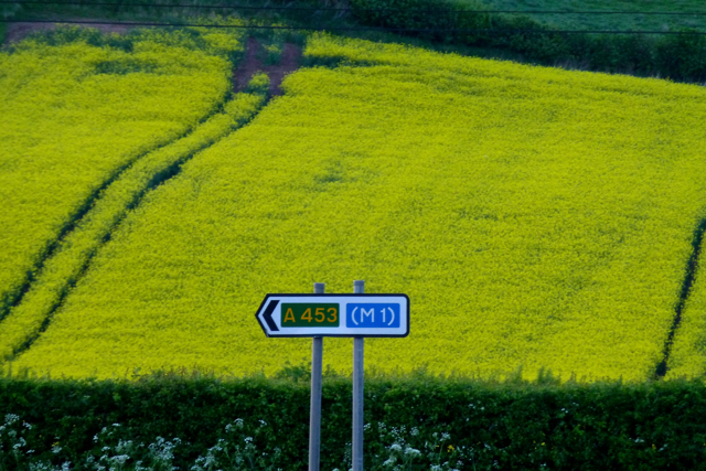 A road sign and a field of rape