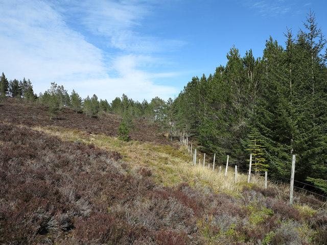 Plantation edge at Coire Mor
