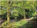 SX6960 : Path by the Avon by Derek Harper