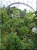 SX0455 : A general view of the interior of the Rainforest biome at the Eden Project by Rod Allday