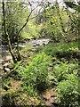 SX6961 : River Avon, Penstave Copse by Derek Harper