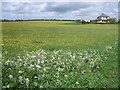 SU0785 : Buttercup meadow near Greatfield by Vieve Forward