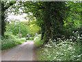TG3109 : View along Witton Lane by Evelyn Simak