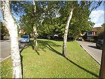 TQ2688 : Green on Vivian Way, Hampstead Garden Suburb by David Howard