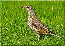 SP2865 : Warwick : Priory Park - Bird by Lewis Clarke