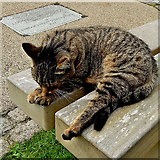 J4844 : Downpatrick - Cat at Down Cathedral Graveyard by Suzanne Mischyshyn