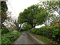 TM4792 : Staithe Road, Burgh St.Peter by Adrian Cable