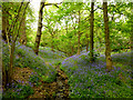 SJ9791 : Bluebells in Bishop Wood, Etherow Country Park by Clive Giddis