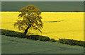 NT7538 : A tree on arable farmland by Walter Baxter