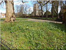 TM1644 : Green area at the Southern entrance to Christchurch Park and St Margaret's Church by Hamish Griffin