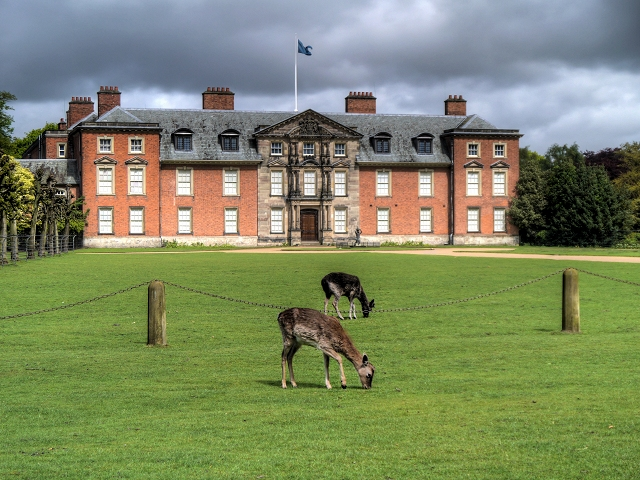 Deer on the Lawn at Dunham Massey Hall