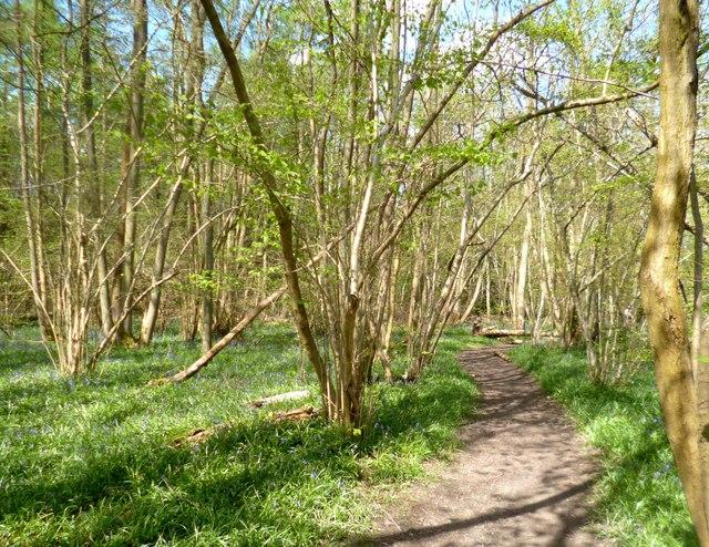 Path in Gouldings Wood