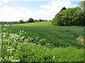 TF9829 : Fields by Manor Farm by Evelyn Simak