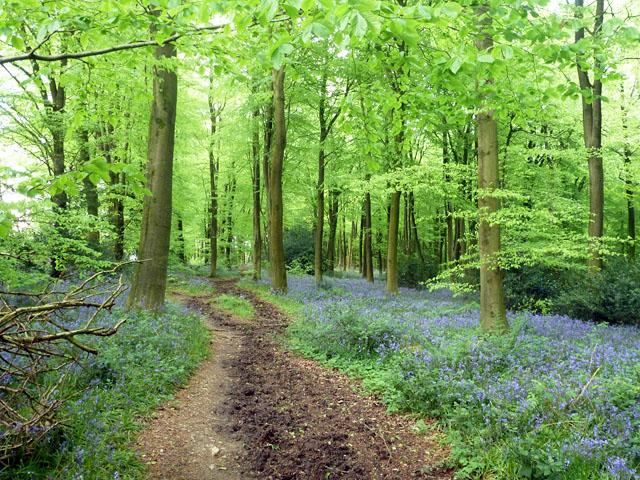 Path, Chawton Park Wood