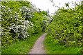 SO8855 : Worcester : Footpath by Lewis Clarke