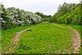 SO8855 : Wychavon : Grassy Field by Lewis Clarke