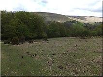 SX7278 : Woodland near Pitton by David Smith