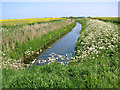 TG5010 : Cow parsley and oilseed rape beside drainage ditch by Evelyn Simak