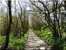SU8216 : Path south of Monkton Farm by Chris Gunns