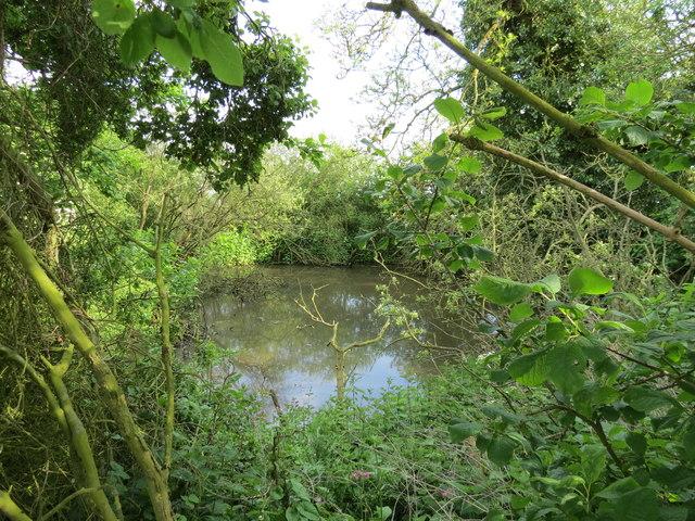 Horse  Keld  Pond  hidden  among  trees