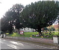 SO8415 : Churchyard perimeter trees, Matson, Gloucester by Jaggery