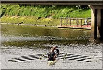 J3371 : Rowing, River Lagan, Stranmillis, Belfast - May 2014(1) by Albert Bridge