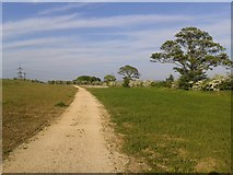 SE6451 : Path on Kimberlow Hill by DS Pugh