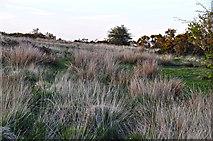 SS8429 : North Devon : Exmoor : Guphill Common by Lewis Clarke