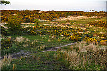 SS8429 : North Devon : Exmoor : Woodland Common by Lewis Clarke