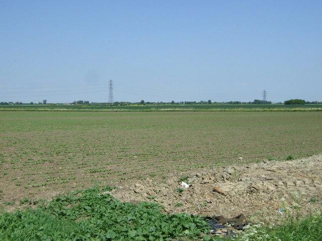 Crop field off Long Drove